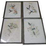 bird lithographs by Gould & Hart and Gould & Richter