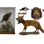 Taxidermy Collection at Unique Auctions