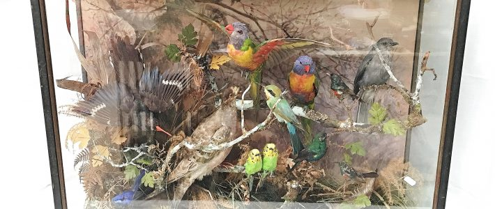 Massive Taxidermy collection in New Years Day 2019 Auction