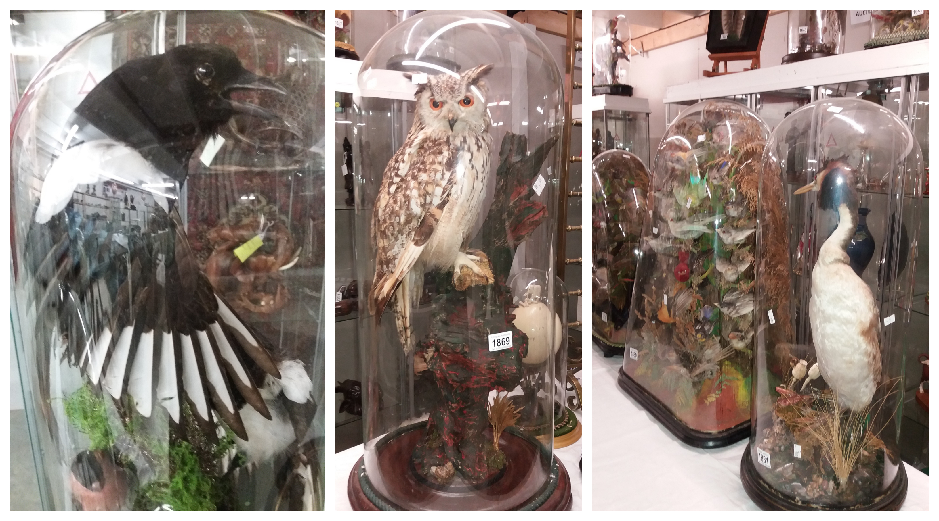 Extraordinary Collection of Taxidermy Comes to Auction