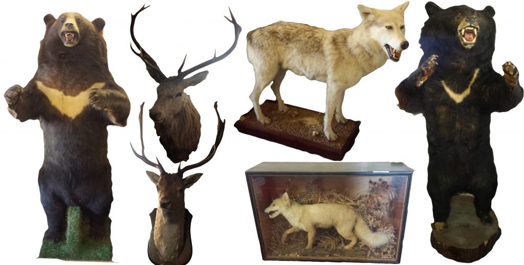 Another Taxidermy Collection Entrusted to Unique Auctions